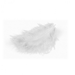 Decorative Feathers by Meyco / White
